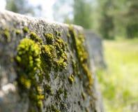 Moss. Stock Photos