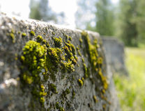 Moss. Stock Images