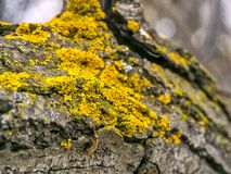 Moss. Beautiful patterns moss caught on the tree looks fantastic Stock Images