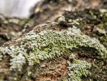 Moss. Beautiful patterns moss caught on the tree looks fantastic Stock Photography