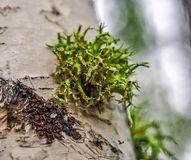 Moss. Beautiful patterns moss caught on the tree looks fantastic Royalty Free Stock Images