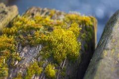 Moss. Beautiful moss on a tree Royalty Free Stock Photography