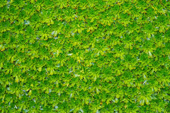 Moss bed Royalty Free Stock Images