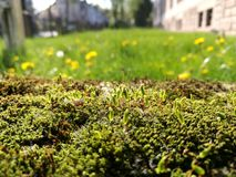 Moss being bathed with sunset light Royalty Free Stock Photography