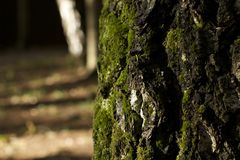 Moss on a birch pile stock image