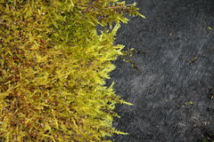 Moss on black log Stock Image