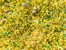 Moss, blades of grass and rabbit droppings Stock Photography