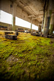 Moss and blocks Royalty Free Stock Photography