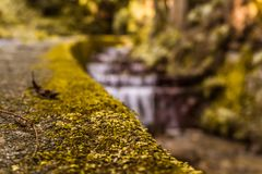 Moss with a blurry green background and water royalty free stock photography