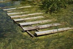 Moss Bog pantanoso Fotografia de Stock Royalty Free