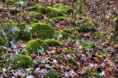 Moss on bolders in autumn Stock Image