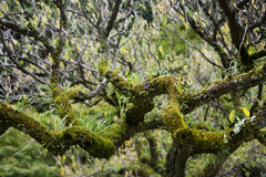 Moss and branches. In the forest Royalty Free Stock Images