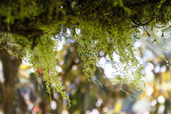 Moss on branches. In the woods Royalty Free Stock Photos
