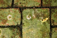 Moss on Brick Royalty Free Stock Images