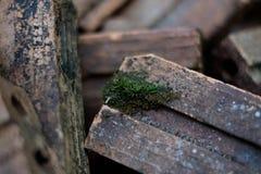 Moss on The Brick Royalty Free Stock Photos