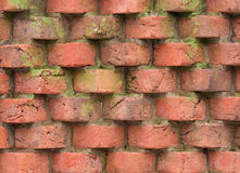 Moss and brick background. Moss stained old red brick wall Stock Images