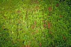 Moss on the brick floor. Stock Photos