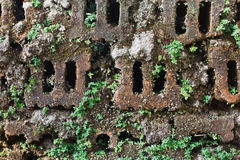 Moss on brick Stock Photos