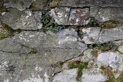 Moss and bricks. Moss in between ancient white bricks Stock Photos