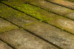 Moss on the bricks Royalty Free Stock Images