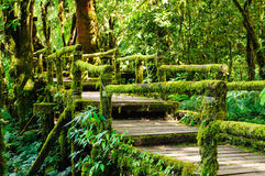 Moss and bridge Stock Photography