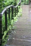 Moss Bridge Royalty-vrije Stock Foto