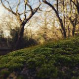 Moss on the bridge. Green moss on the bridge in forest Royalty Free Stock Images