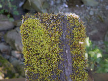 Moss On The Bridge Sleeper arkivfoto