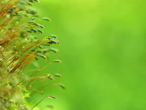 Moss on a bright green background Stock Photos
