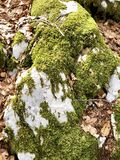 Moss green on rock Royalty Free Stock Photography