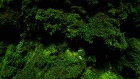 Moss Canyon Rock Background vídeos de arquivo