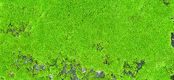 Moss carpet Stock Photo