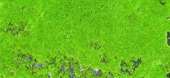 Moss Carpet Stock Photo
