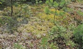 Moss Carpet Lizenzfreies Stockbild