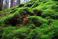 Moss Carpet Fotografía de archivo libre de regalías