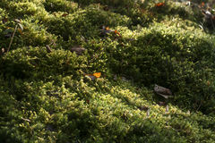 Moss carpet in the forest soil Stock Photo
