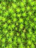 Moss Carpet vívido verde fotografia de stock royalty free