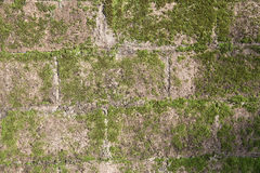 Moss on cement blocks. Moss on the wall of cement blocks in the soft of the early morning light Royalty Free Stock Image