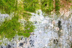 Moss on cement Stock Photos