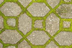 Moss on cement  pathway Royalty Free Stock Photo