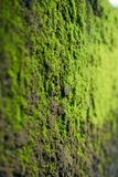 Moss on cement wall Stock Images