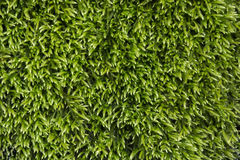 Moss. Close-up of bright green moss in the spring season Stock Images