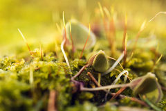 Moss In Close-up Shot Royalty Free Stock Photography
