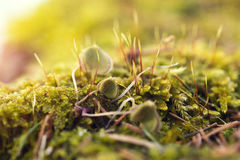 Moss In Close-up Shot Stock Photo
