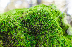 Moss close up Stock Images