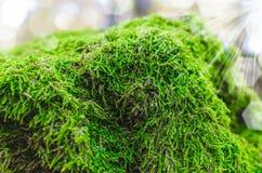 Moss close up Stock Images