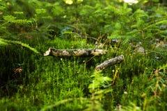 Moss close up  Stock Photos