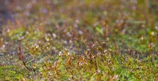 Moss Close Up und bunter unscharfer Hintergrund Lizenzfreies Stockfoto