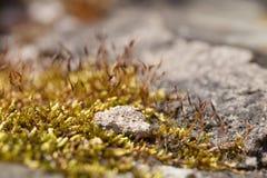 Moss close-up Stock Photo
