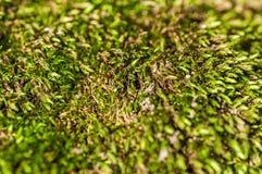 Moss Close vert, abstrait Photo libre de droits